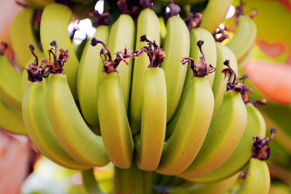 Chiquita Refuses Brazilian Acquisition Bid